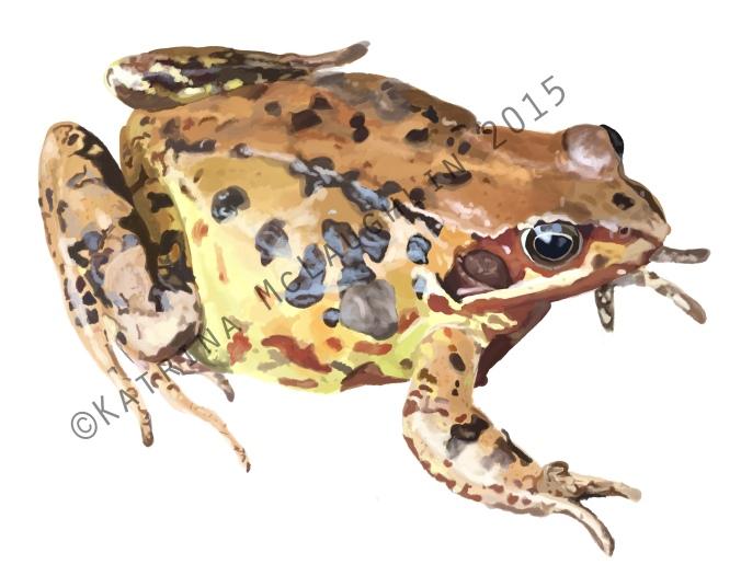 digi frog