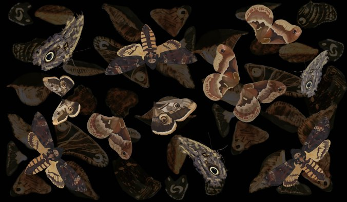moth scarfj